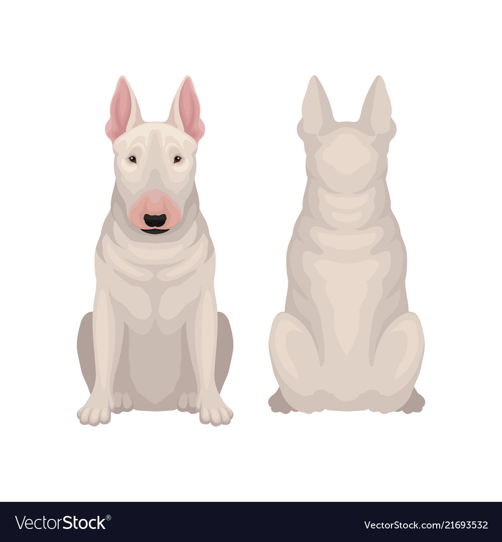 Dogs sitting on a fence with tails clipart back view banner free library Front and back view of sitting bull terrier dog vector image banner free library