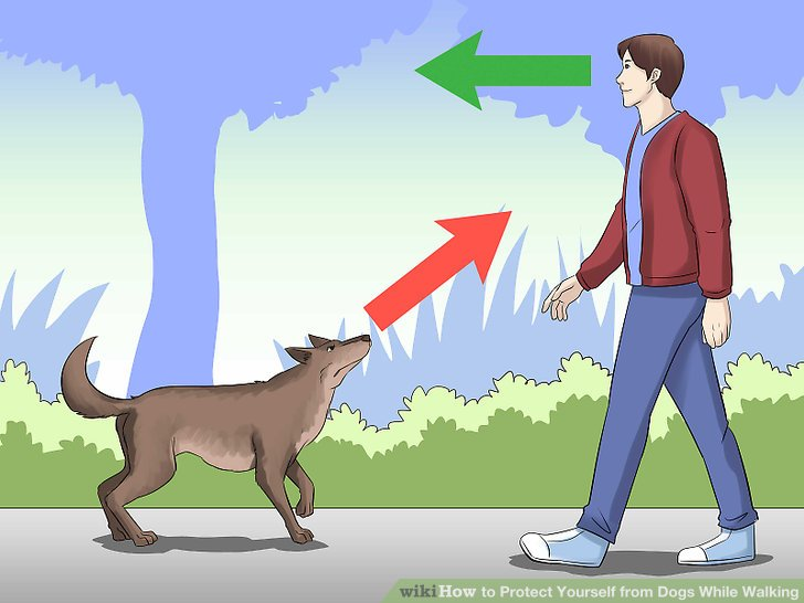 Dogs sitting on a fence with tails clipart back view png royalty free stock 4 Ways to Protect Yourself from Dogs While Walking - wikiHow png royalty free stock