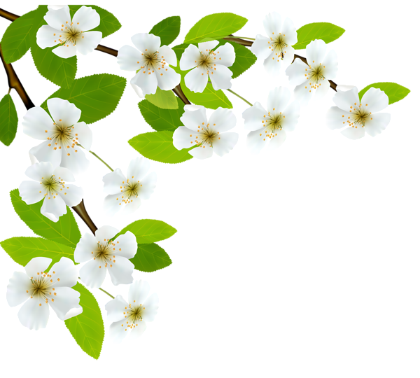 Dogwood flower clipart clipart free download White Spring Branch PNG Clipart Image | PNG | Pinterest | Clipart ... clipart free download