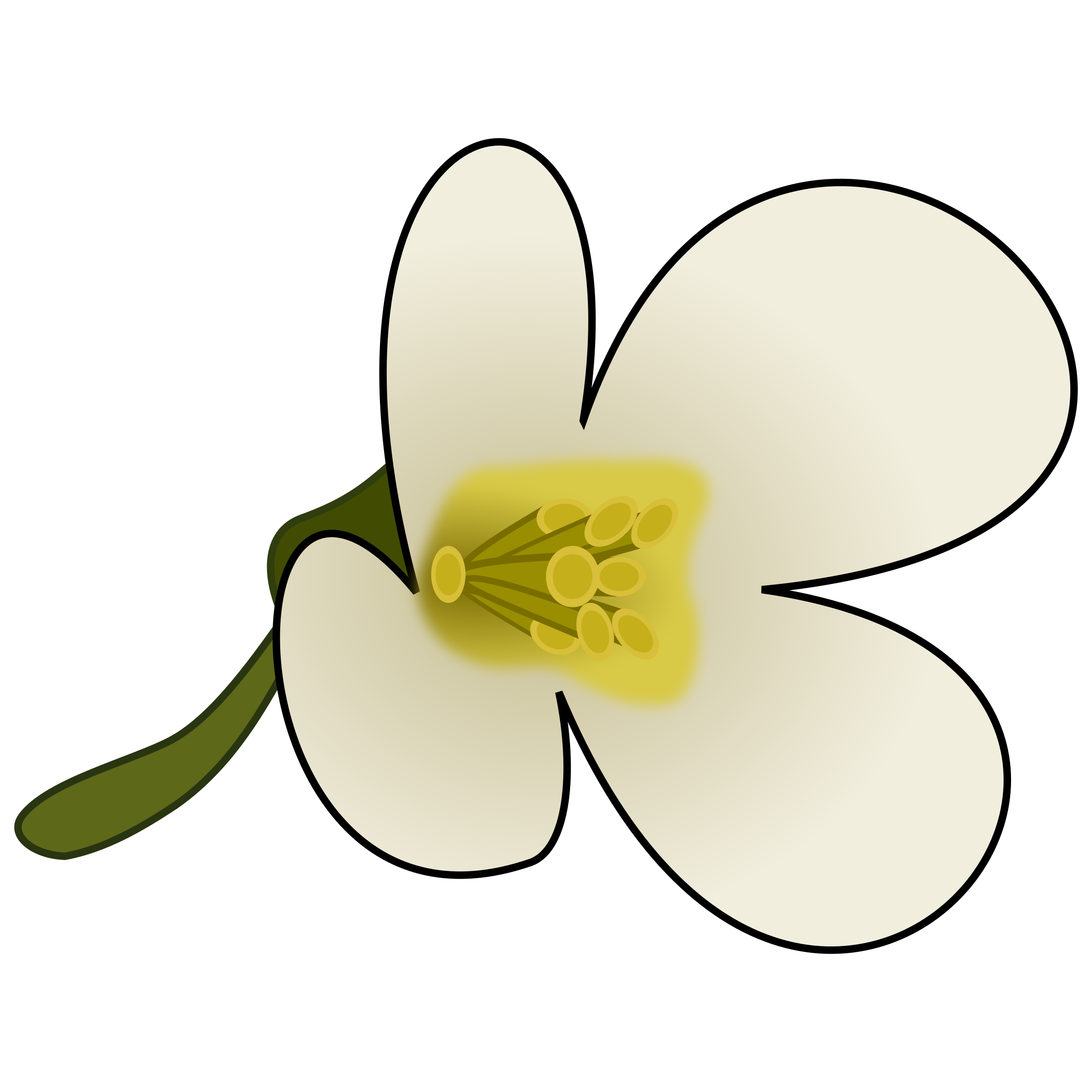 Dogwood flower clipart image library download Clipart - Thaliana Flower image library download