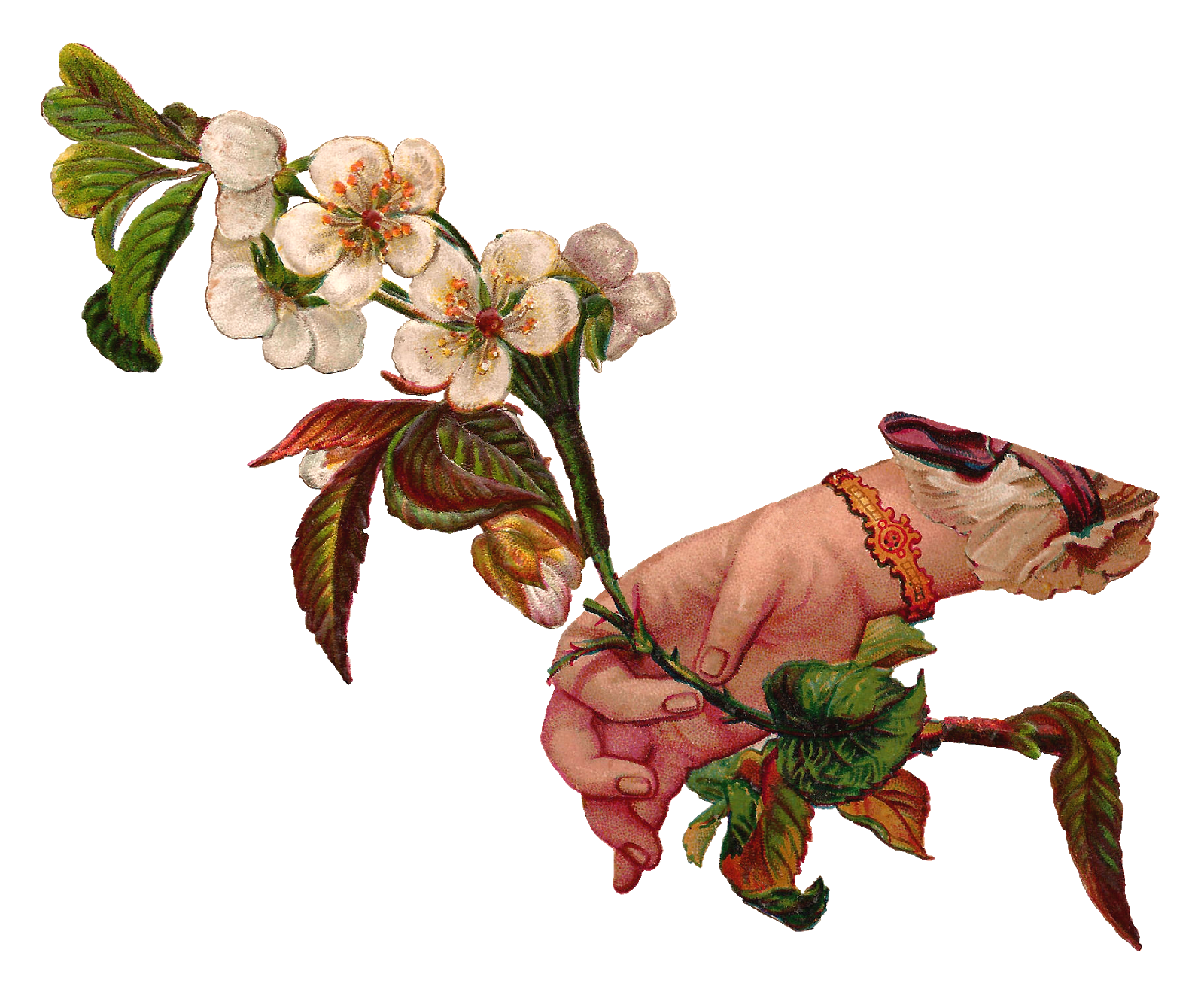 Dogwood flower clipart clipart royalty free Antique Images: Digital Illustration Flower and Hand Dogwood Branch ... clipart royalty free