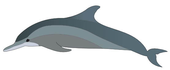 Dolphin clipart real picture transparent download Free Dolphin Clipart | Free Download Clip Art | Free Clip Art | on ... picture transparent download