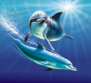 Dolphin clipart real image transparent Dolphin clipart real - ClipartFest image transparent