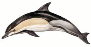 Dolphin clipart real png free stock Free Common-Dolphin Clipart - Free Clipart Graphics, Images and ... png free stock