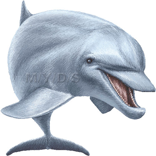 Dolphin clipart real banner free download Bottlenose dolphin clipart - ClipartFox banner free download