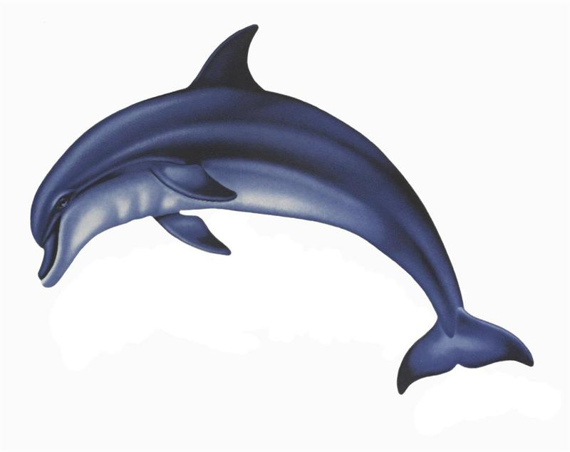 Dolphin clipart real clip freeuse stock 1280x960px Rainbow and Dolphin Images | #354037 clip freeuse stock
