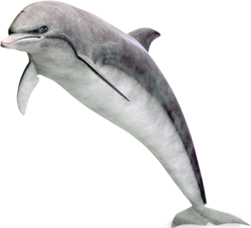 Dolphin clipart real clip art library stock Dolphin PNG image free download clip art library stock