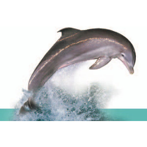 Dolphin clipart real jpg free download Dolphin Clipart Real - clipartsgram.com jpg free download