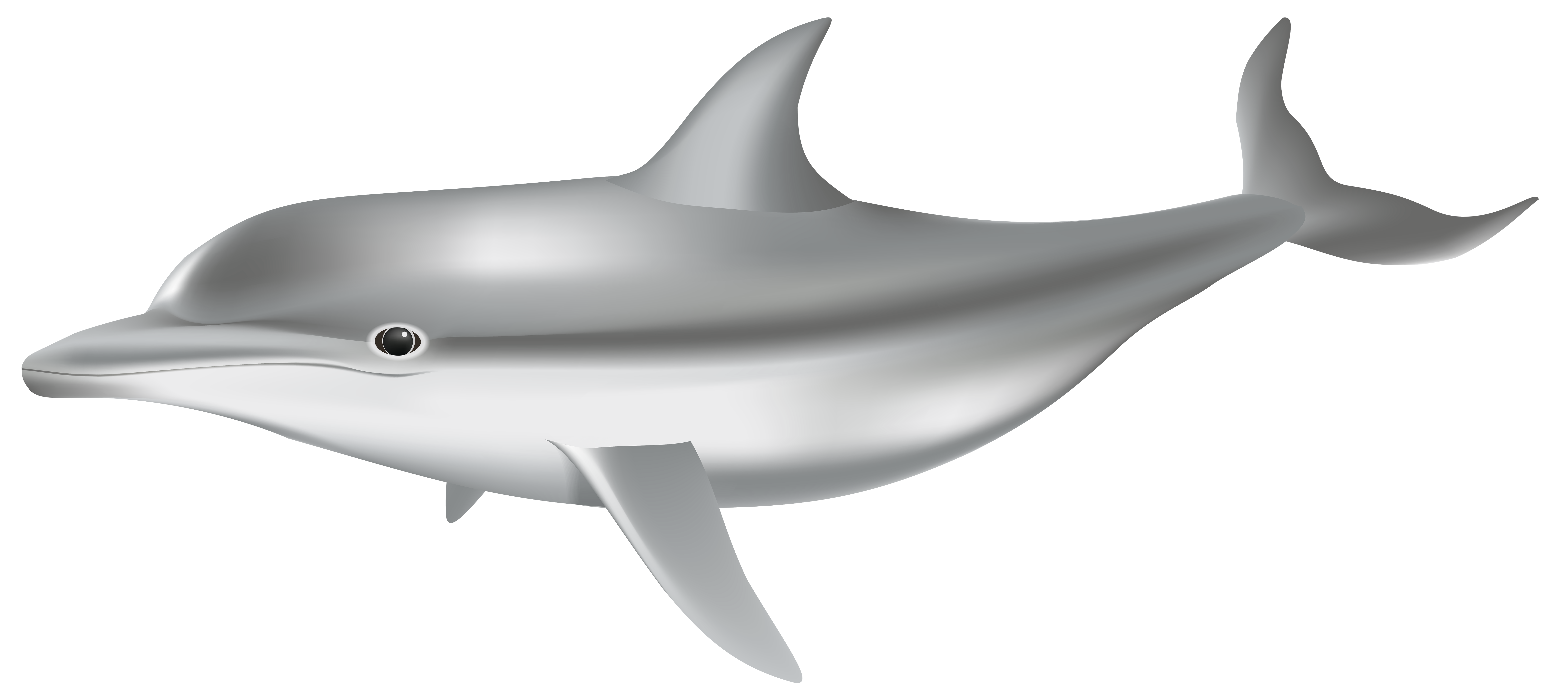 Fish underwater clipart black and white png library Dolphin PNG Transparent Clip Art Image | Gallery Yopriceville ... png library