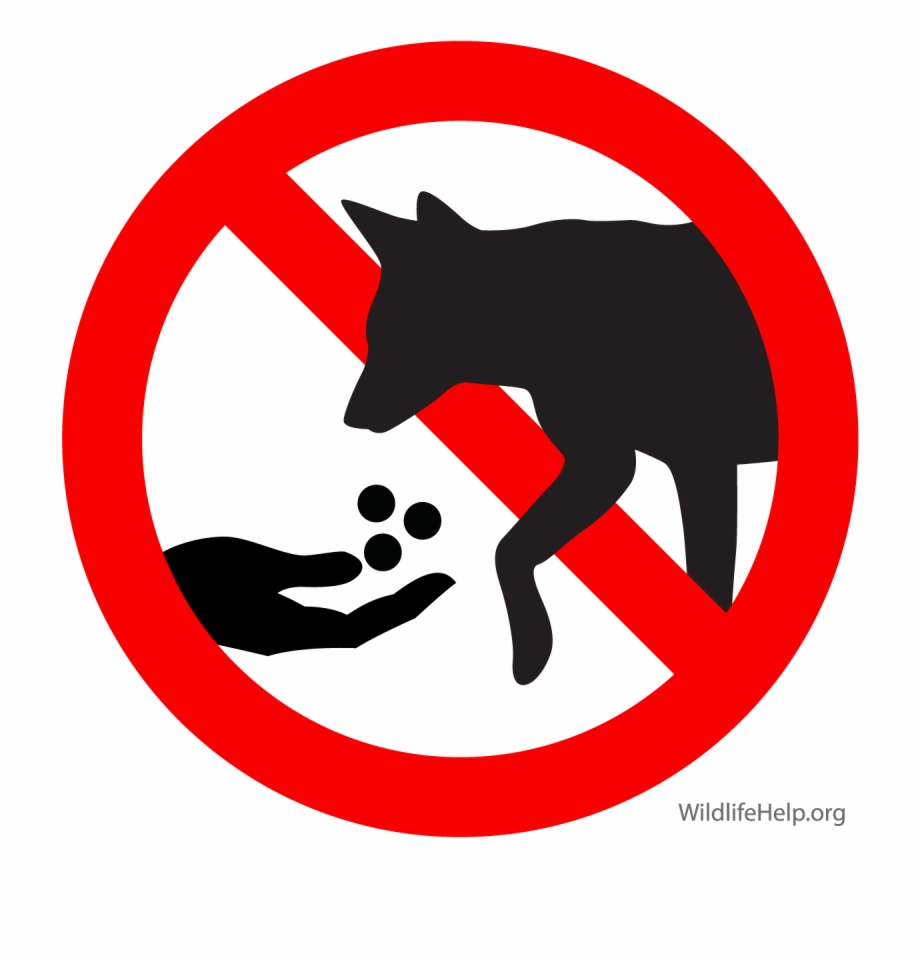 Don t feed the animals clipart picture transparent library Feeding Coyotes Directly Or By Leaving Pet Food And - Don T Feed ... picture transparent library