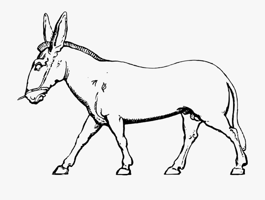 Mule clipart black and white clip free Donkey Mule Pack Animal Farm Animal Domestic - Black And White ... clip free