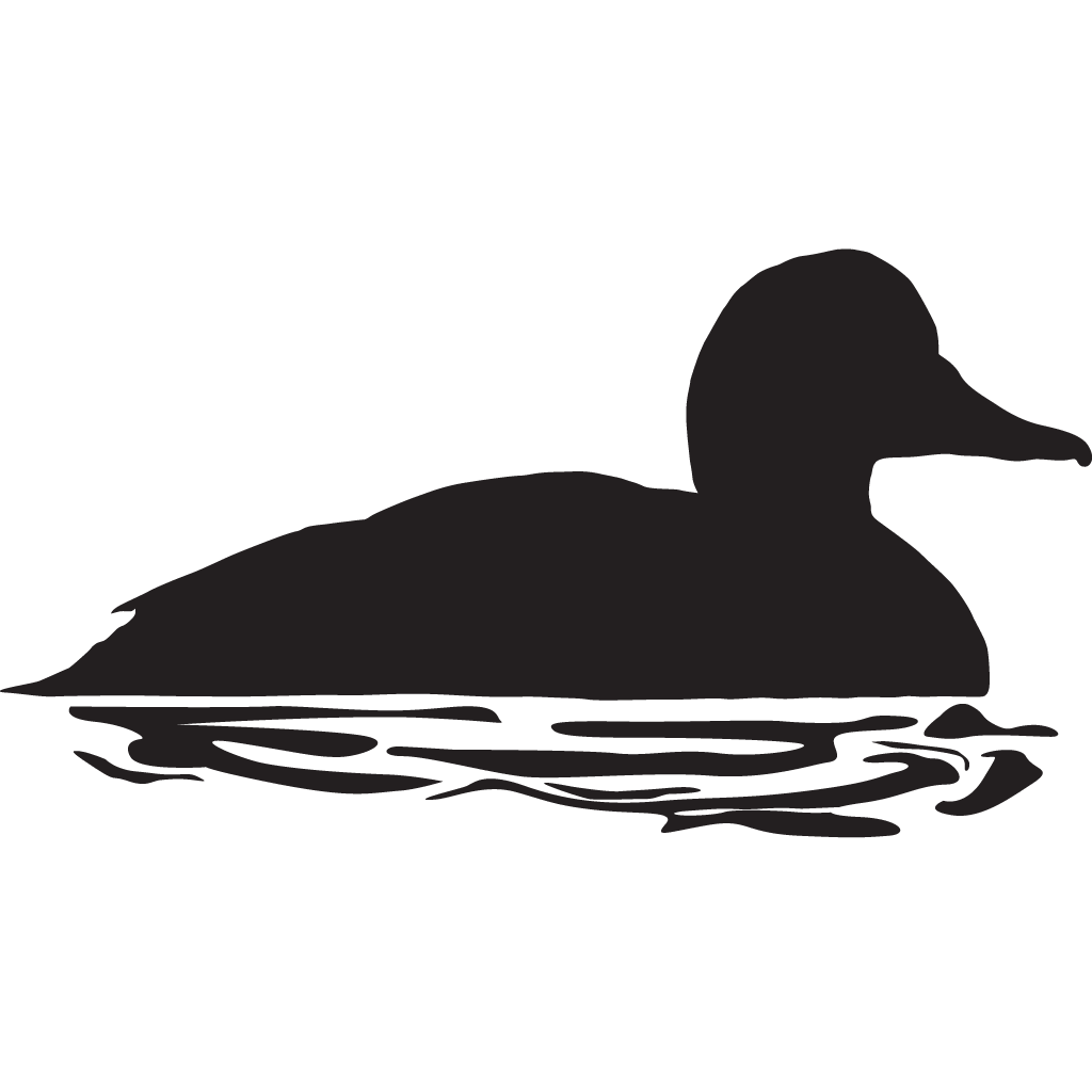 Dont feed the ducks clipart png black and white picture Bufflehead Overview, All About Birds, Cornell Lab of Ornithology picture