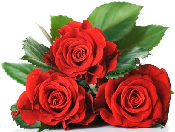 Download flower images