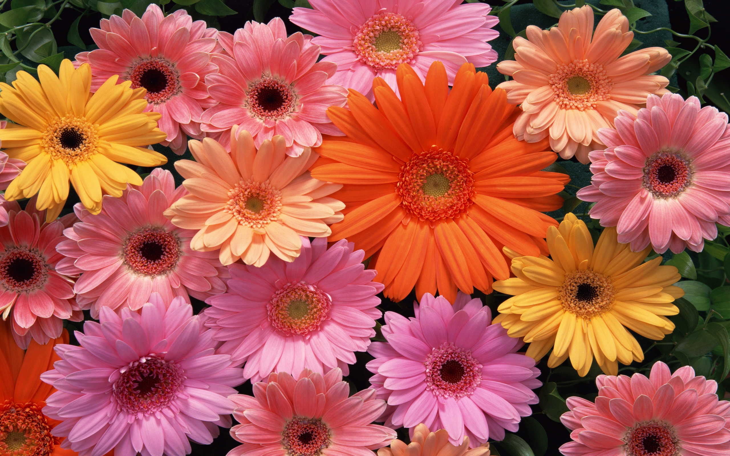 Download flower images jpg transparent library Beautiful Flower Images Download Background 1 HD Wallpapers ... jpg transparent library