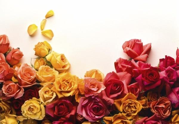 Download flower images jpg transparent Rose flowers free stock photos download (11,658 Free stock photos ... jpg transparent