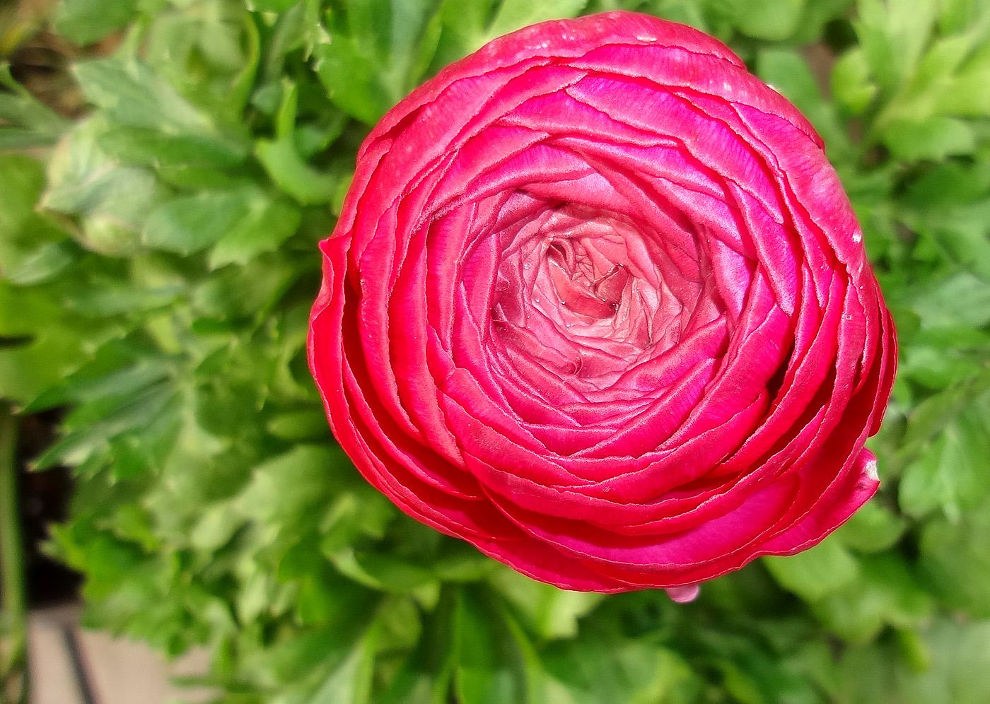 Download flower images clipart transparent Webshots Wallpapers Flower 10080 - Flower Wallpapers - Flowers clipart transparent