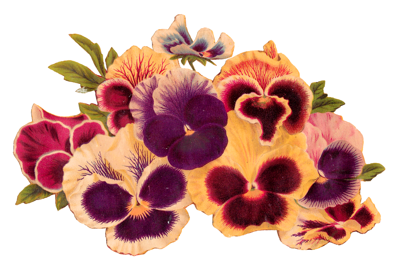 Download images of flowers banner library Antique Images: Royalty Free Pansy Clip Art Image Download Flower ... banner library