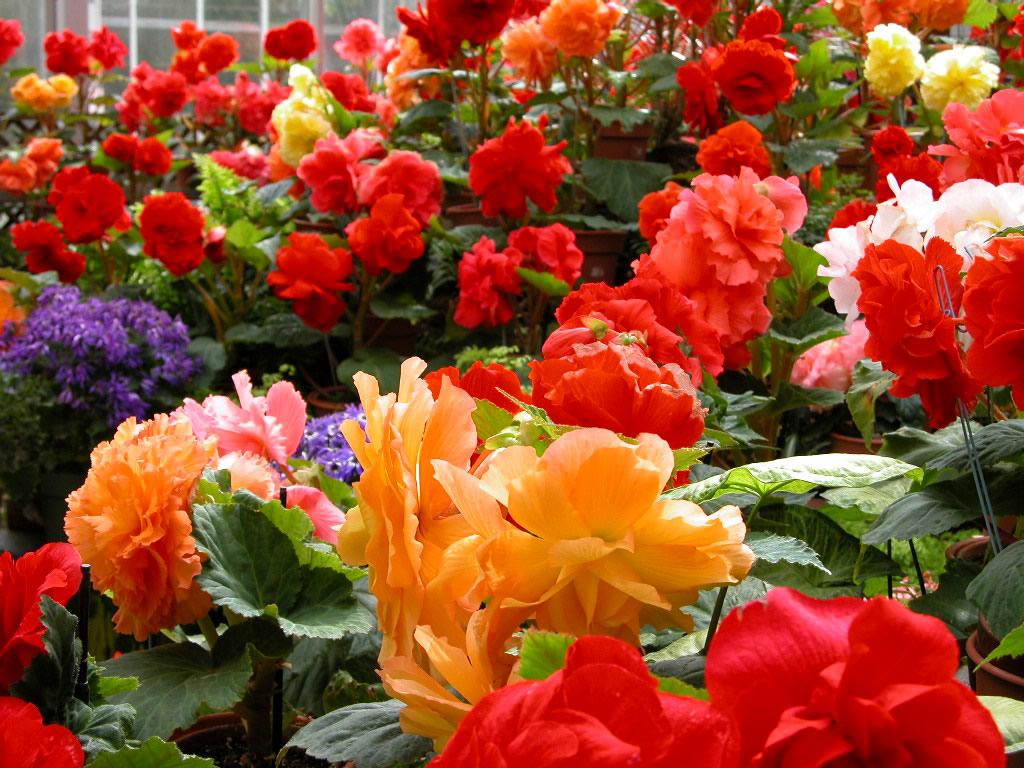 Download flower photos clip art Flowers 10984 - Flower Wallpapers - Flowers clip art