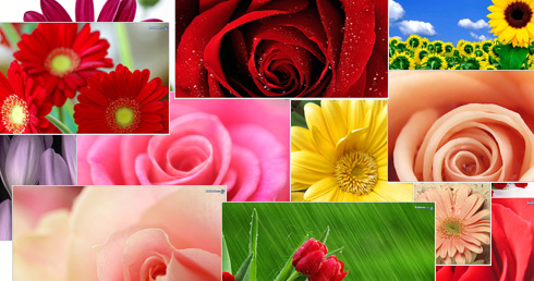 Download flower photos image freeuse stock Flower Images, Flowers Pictures, Flower Pics, Flower Picture ... image freeuse stock