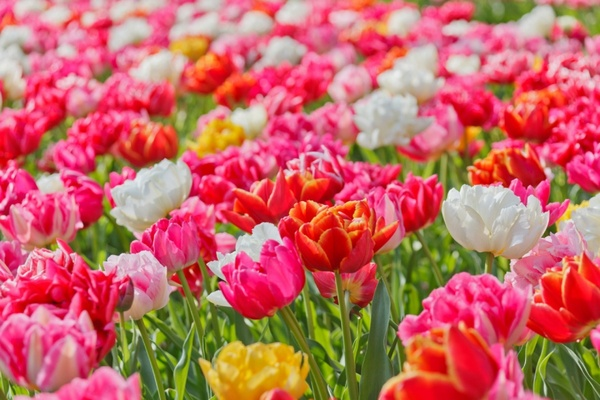 Download flower photos picture download Wallpaper flower images free stock photos download (11,966 Free ... picture download