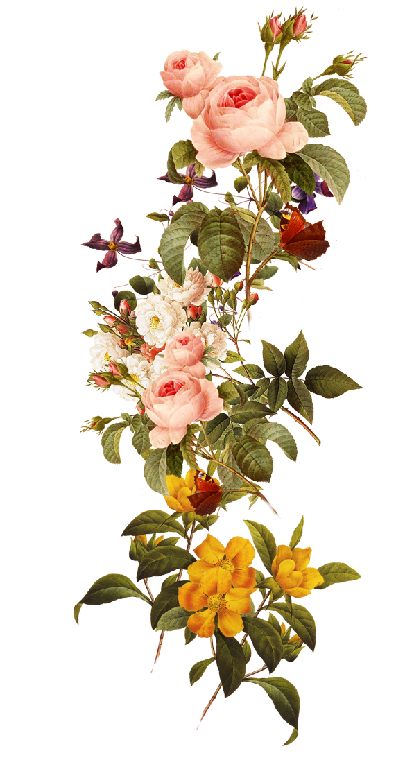 Free download flowers images clipart royalty free library Download Flower - Beautiful flowers 571*1096 transprent Png Free ... clipart royalty free library