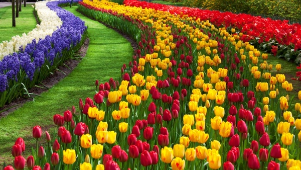 Download flower photos vector free download Tulip flower garden Free stock photos in JPEG (.jpg) 5000x2813 ... vector free download