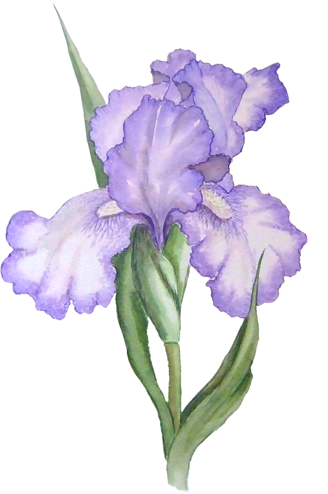 Download free images of flowers image transparent Free Transparent PNG files and Paint Shop Pro Tubes | Pinterest ... image transparent