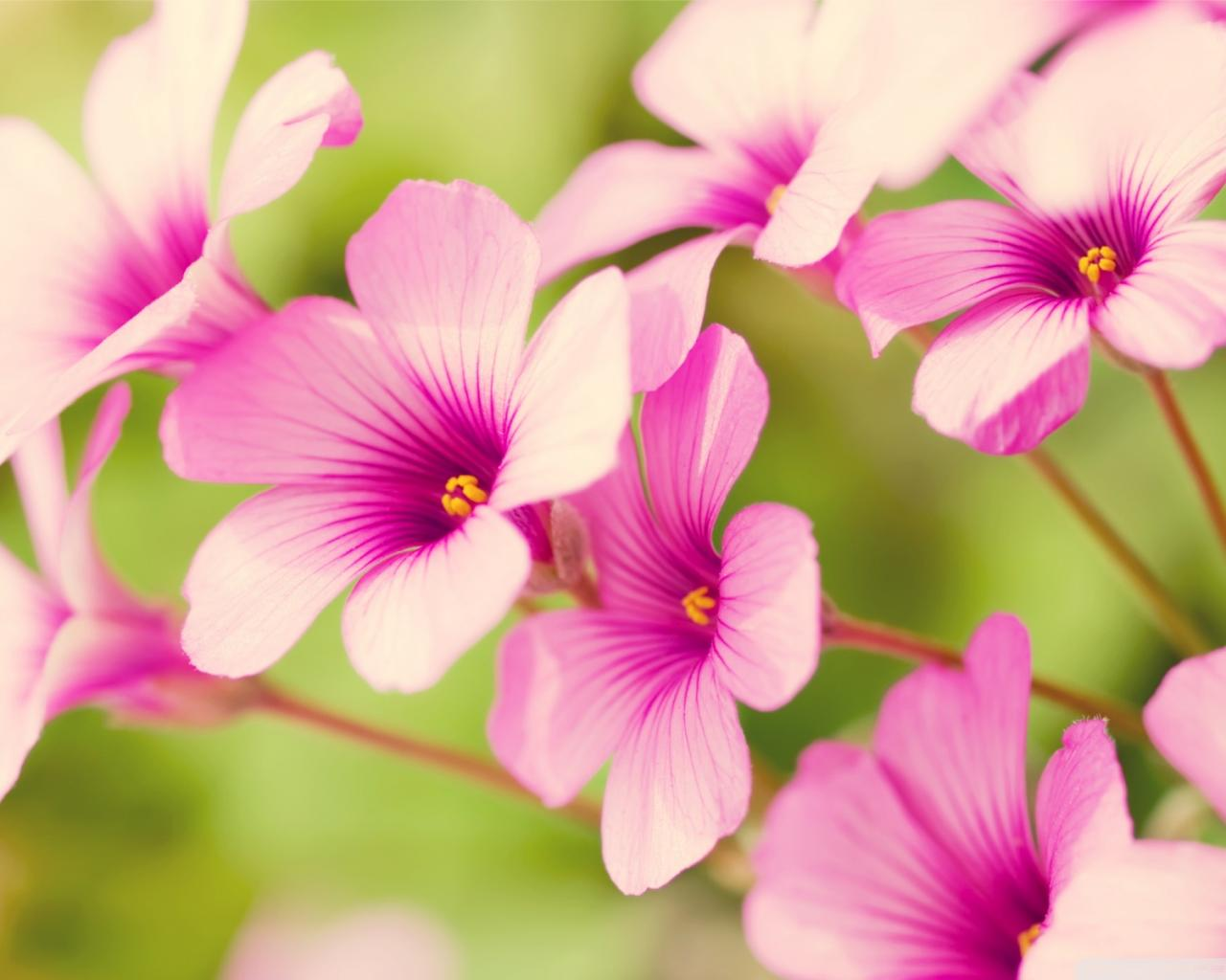 Download free flowers pictures image Wallpapers Flowers Free (76+) image