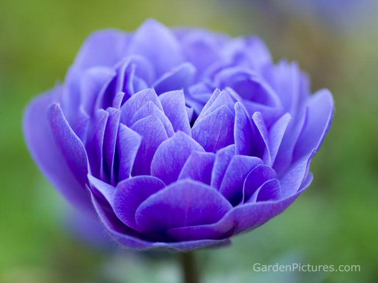 Download free flowers pictures clip transparent Download Free Pictures Of Flowers-Gallery Collections - No Zoku HD ... clip transparent