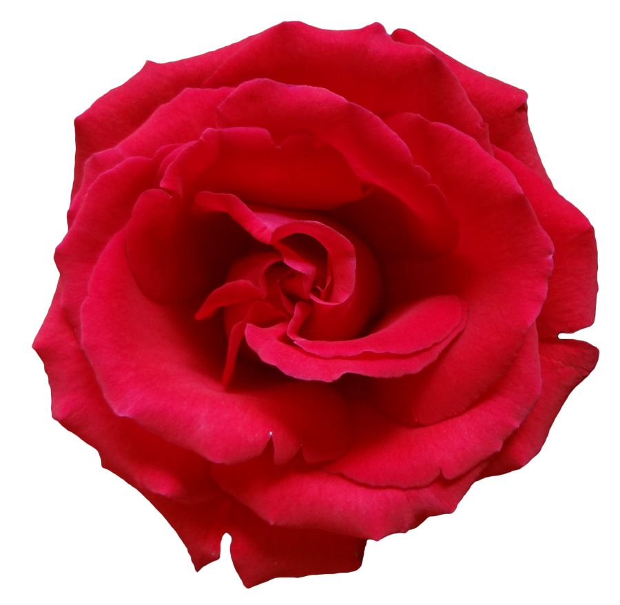 Download free flowers pictures graphic royalty free library Rose Png Flower Beautiful Free graphic royalty free library