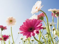 Download free flowers pictures png library download Download Free Pictures Of Flowers-Gallery Collections - No Zoku HD ... png library download