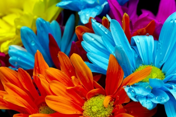 Download free flowers pictures picture free Beautiful flowers high definition picture free stock photos ... picture free