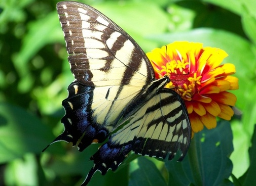 Download images of flowers and butterflies jpg free library Flowers and butterflies background free stock photos download ... jpg free library