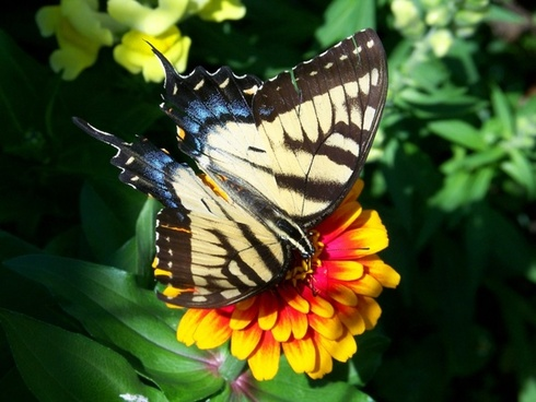 Download images of flowers and butterflies picture royalty free Flowers and butterflies background free stock photos download ... picture royalty free