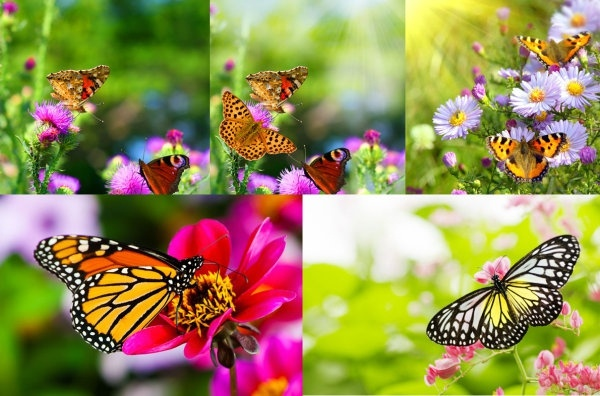 Flower and butterfly images free stock photos download (11,344 ... clipart freeuse library