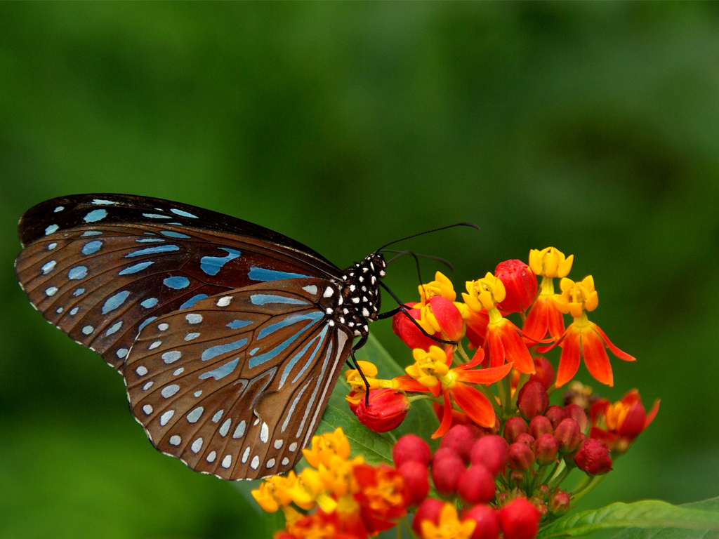 Free pictures of flowers and butterflies - ClipartFest banner library stock