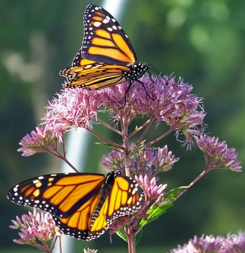 Download images of flowers and butterflies picture freeuse stock Butterfly flowers free stock photos download (11,335 Free stock ... picture freeuse stock