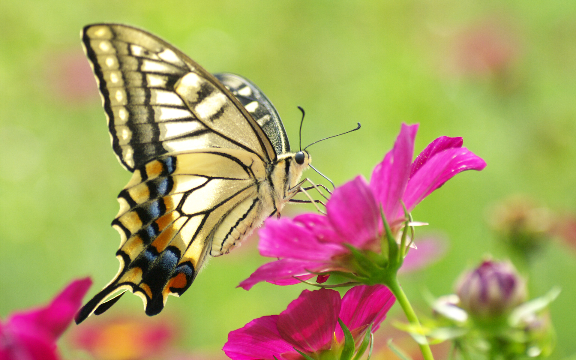 Download Butterfly Flower Butterflies Primary Category Animals ... picture transparent download