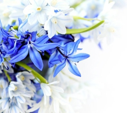 Flower images free stock photos download (10,902 Free stock photos ... clip art freeuse library