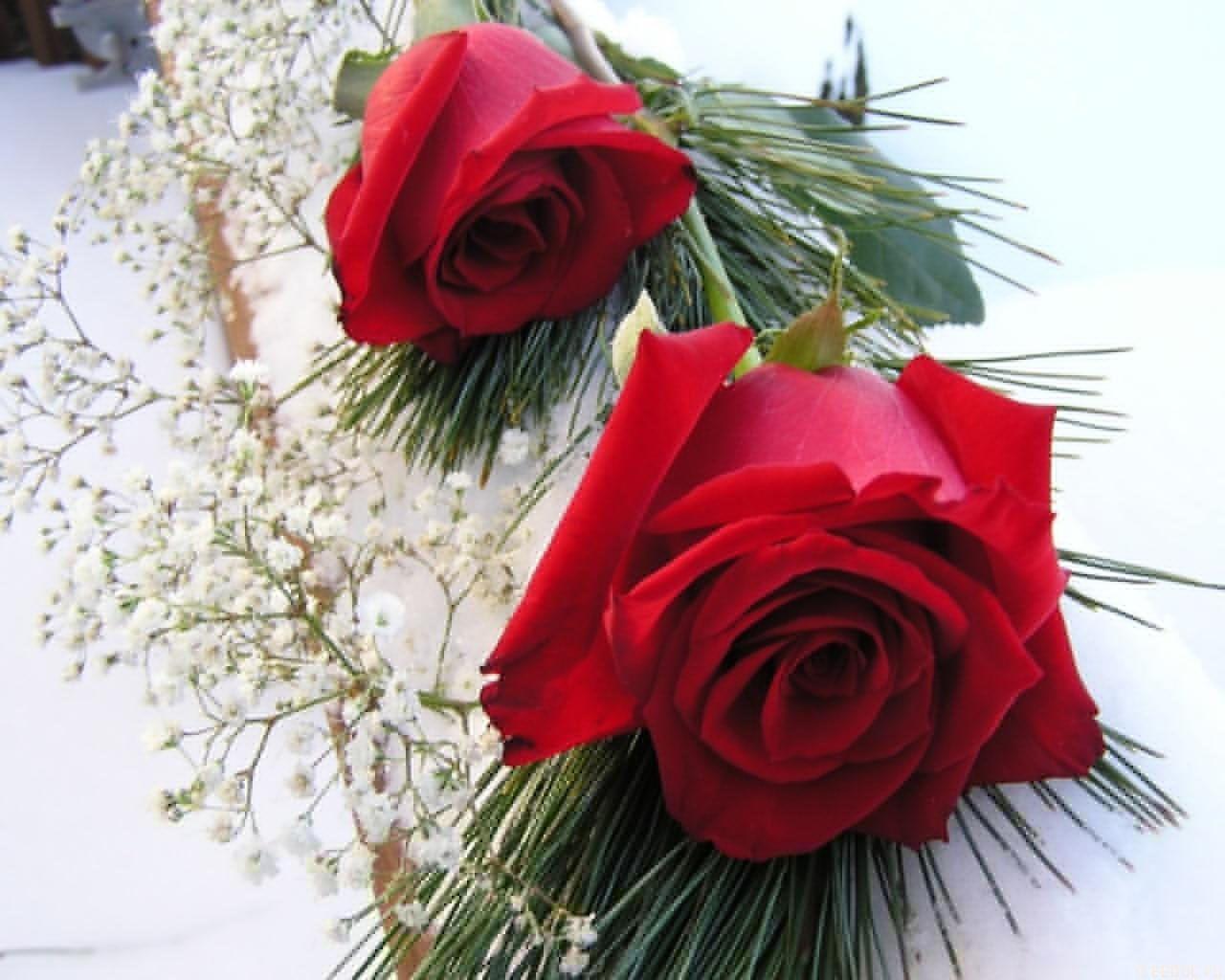Downloadable images of flowers jpg stock wallpaper of flower jpg stock