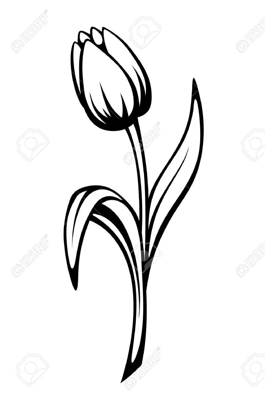 Drawing of tulips clipart picture black and white library Tulip Flower Drawing | Free download best Tulip Flower Drawing on ... picture black and white library