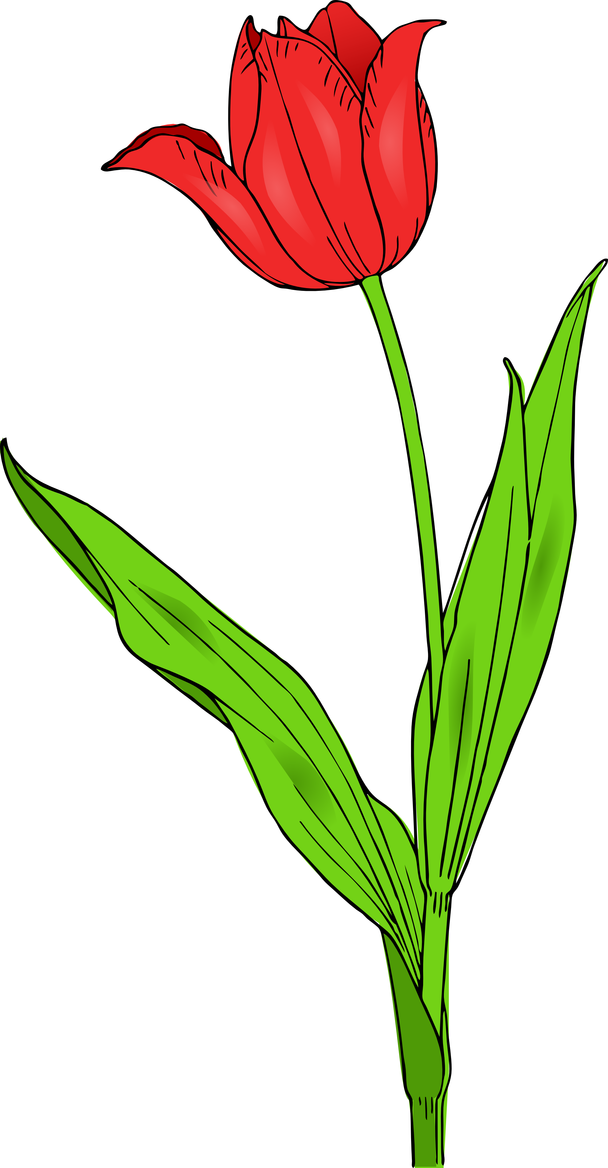Drawing of tulips clipart image freeuse stock Free Tulip Images, Download Free Clip Art, Free Clip Art on Clipart ... image freeuse stock