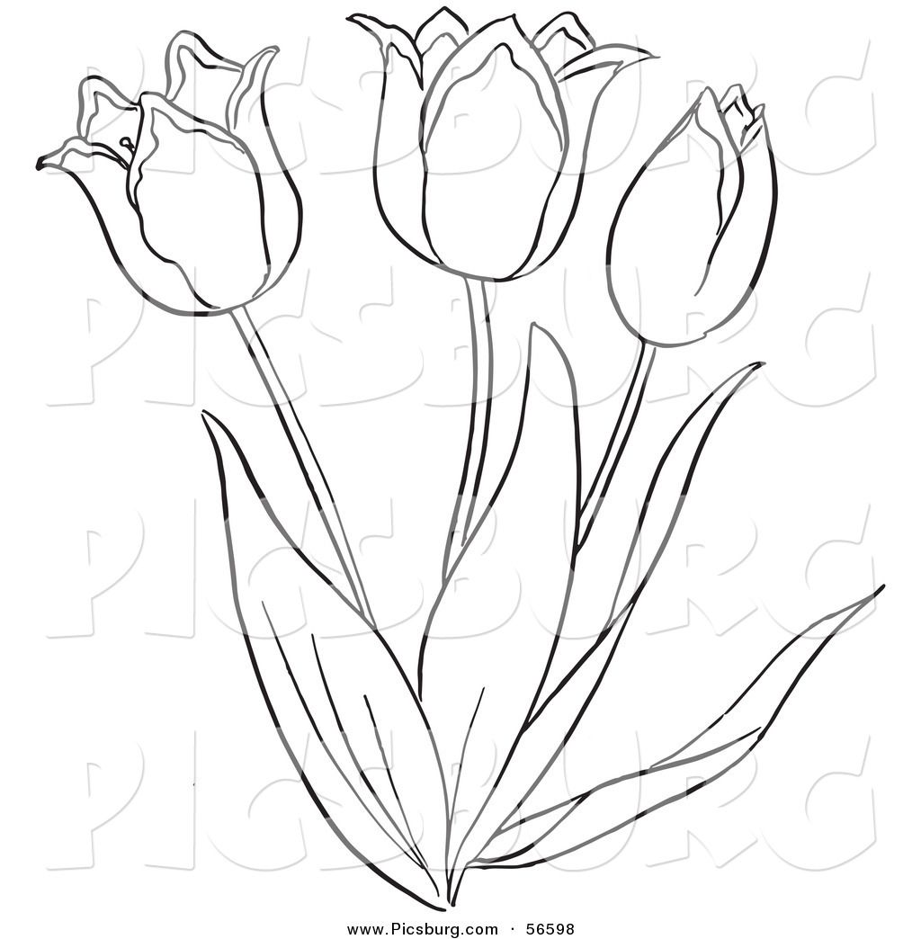Drawing of tulips clipart banner free Pin by Myrna Trauntvein on Easter Holiday | Tulip drawing, Flower ... banner free