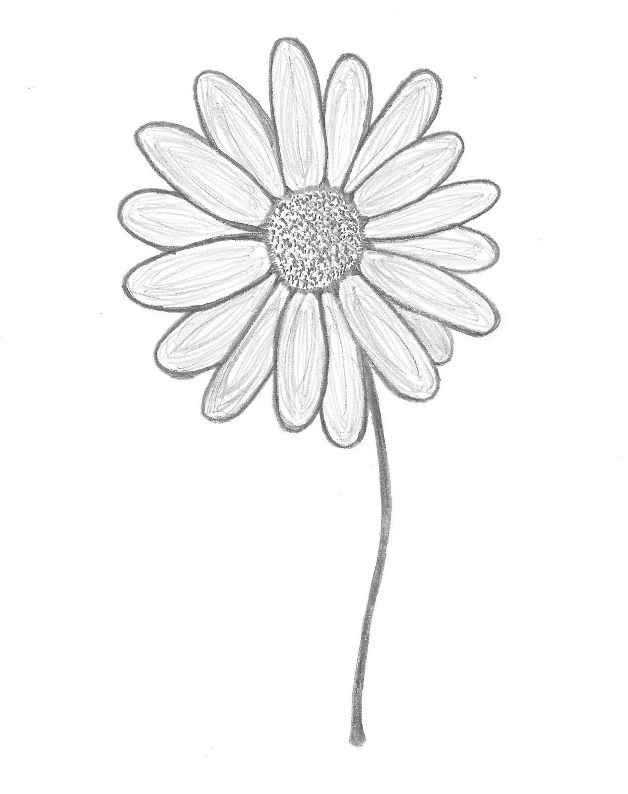 Drawn daisy clipart clipart stock Daisy Drawing Outline at PaintingValley.com | Explore collection of ... clipart stock