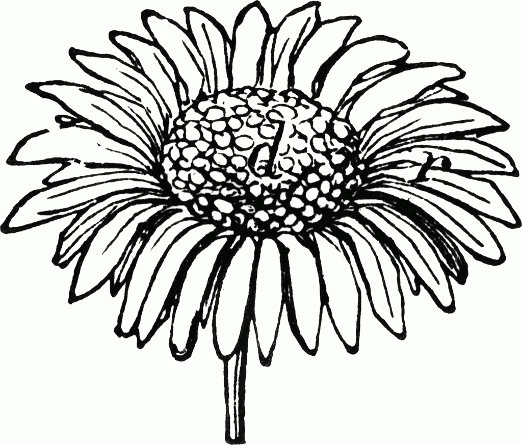 Drawn daisy clipart jpg library download Black And White Daisy Clipart | Free download best Black And White ... jpg library download
