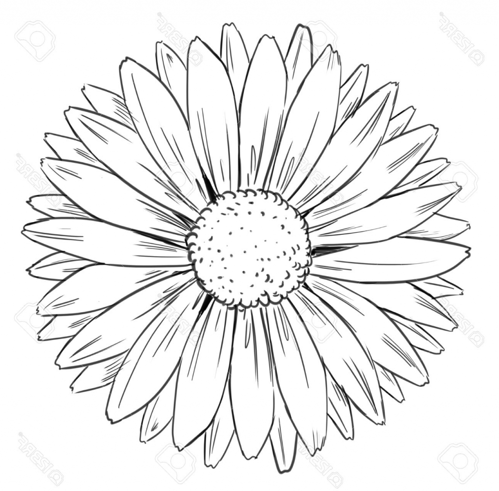 Drawn daisy clipart picture freeuse stock Free Drawn Daisy floral, Download Free Clip Art on Owips.com picture freeuse stock