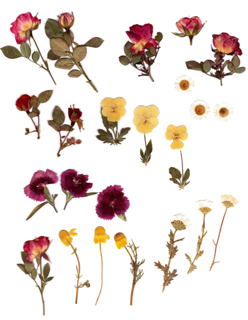 Dry clip art . Dried flower clipart