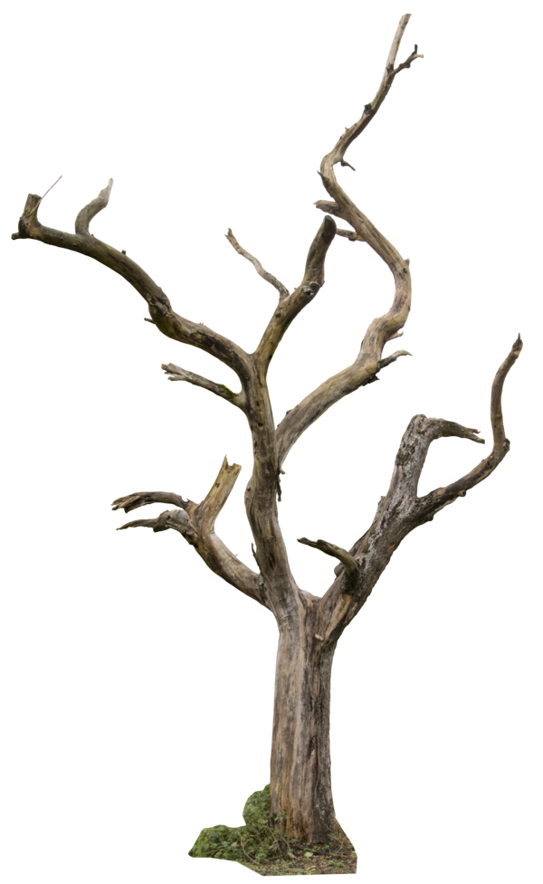 Dry branches clipart png royalty free stock Dry Tree Branches Png , (+) Pictures - trzcacak.rs png royalty free stock