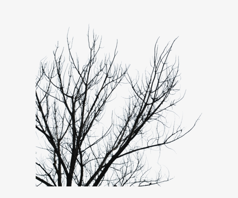 Dry branches clipart jpg transparent Download Dry Branches Png Clipart Branch Tree Sky Leaf - Branches ... jpg transparent