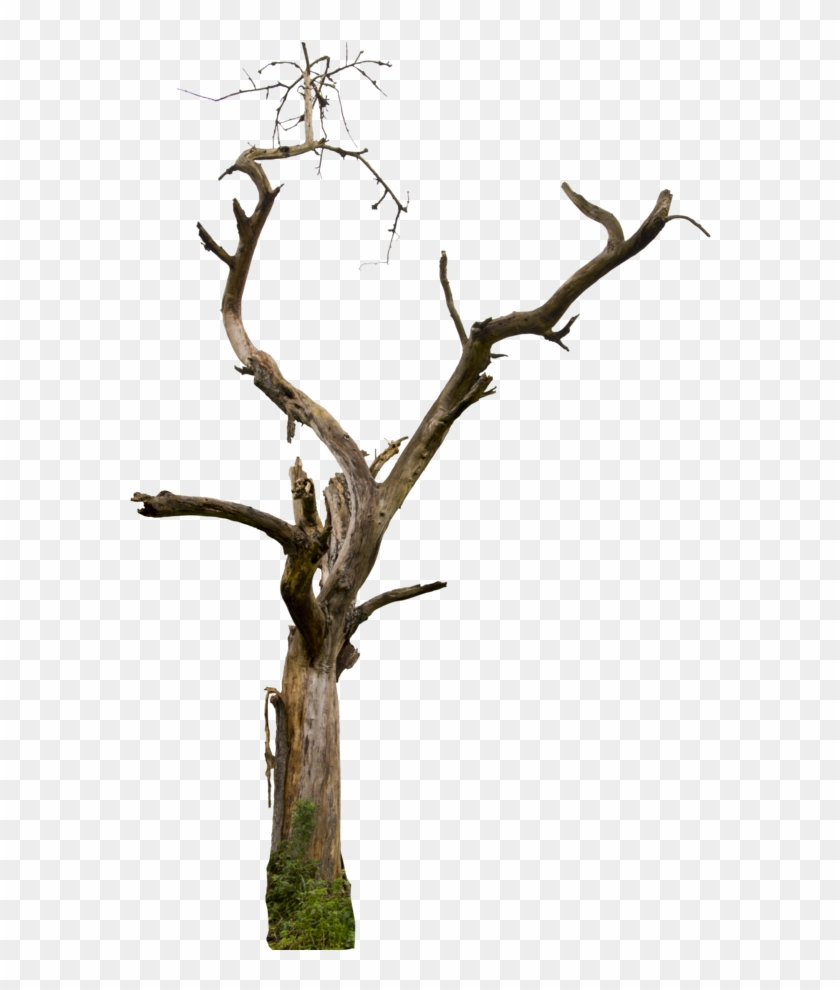 Dry branches clipart graphic stock Dry Tree Png - Dry Tree Branches Png, Transparent Png - 600x917 ... graphic stock